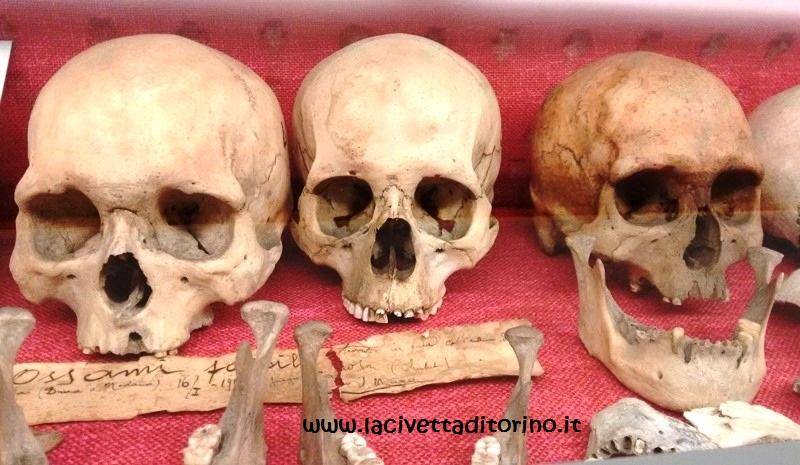 Crani preistorici della Patagonia nel Corridoio Etnografico