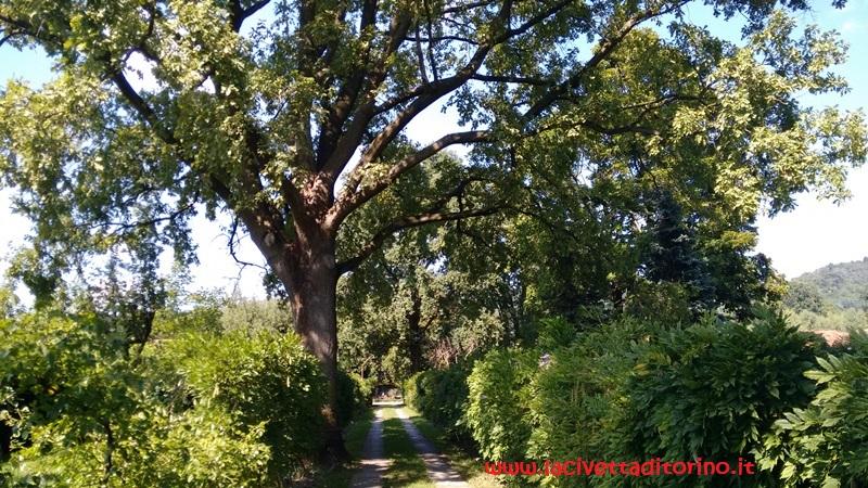 Il sentiero nel giardino del Meleto